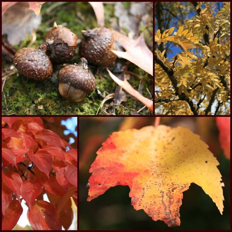 Fall colors collage 2