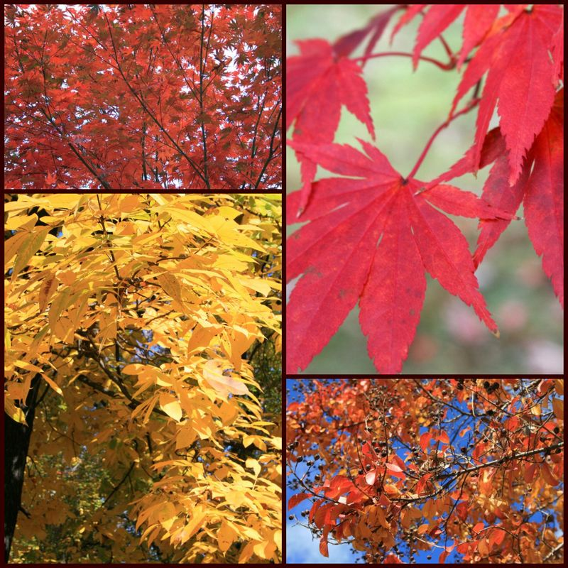 Fall colors collage 1