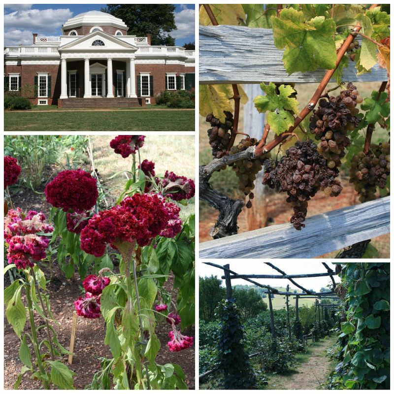 Monticello collage 2