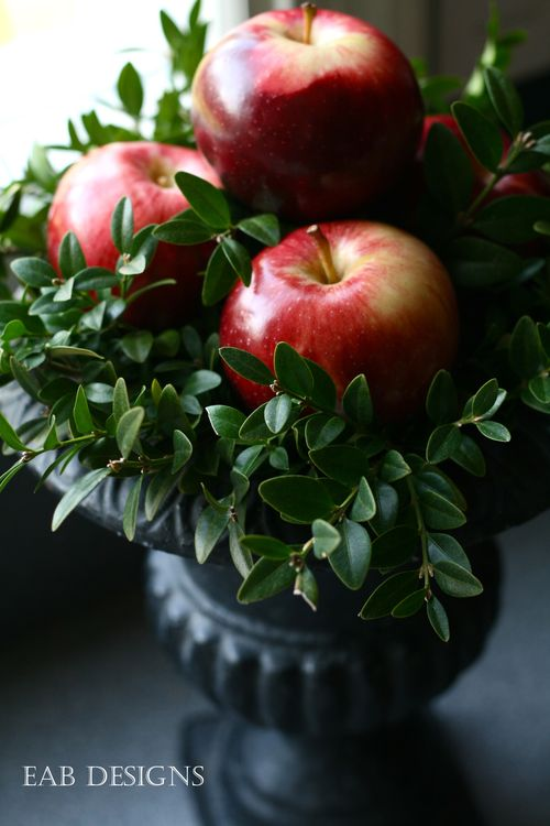 Apples & boxwood
