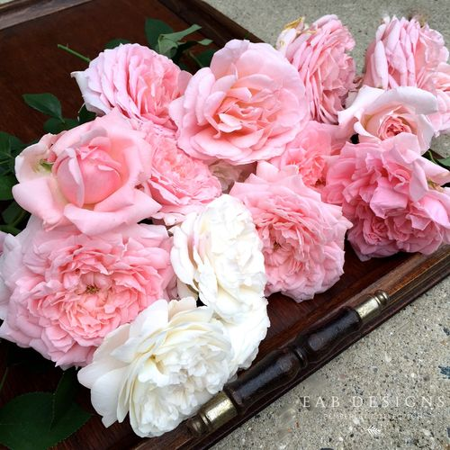 EAB DESIGNS English Garden Roses 5
